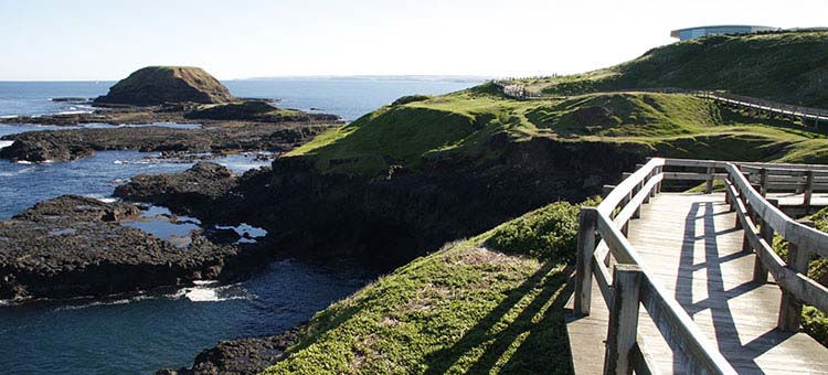The Nobbies Boardwalk on the Phillip Island Day Tour